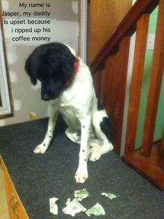Dog Shame lol this one is my favorite :)