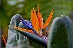 Flores de Lisboa en 35mm - Con la cámara en la mano