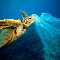 We're facing a global plastic pollution crisis. Here is our overview of the state of marine plastic pollution in numbers. Ocean Pollution, Plastic Pollution, Environmental Pollution, Le Castor, Save Our Oceans, Shocking Facts, Our Environment, Sustainable Environment, Global Warming