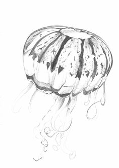 Sketch_Jellyfish_1