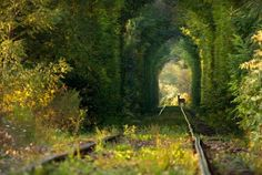 ༺♥༻Loved, then left ༺♥༻.  Abandoned railroad tracks  •♥•✿ڿڰۣ(̆̃̃•Aussiegirl