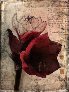 Botanical Art, Botanical Illustration, Illustration Art, Gouache, Horst Janssen, Artist Sketchbook, Painting Collage, Illustrations, Flower Pictures