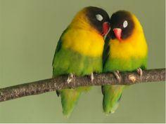 lovebird-0018