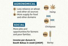 The Potential Impact of Industrial Hemp - Infographic by Marwa Boukarim, via Behance