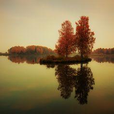 birches by DaiSei on Fotoblur | Landscape Photography