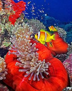 Tropical Dreams: Philippines - Underwater Wonder World