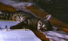 Cats! Cats! Cats! - Google+