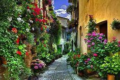 Spello, Perugia, Italy.