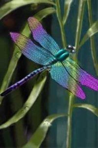 Dragonfly with Amethyst Tipped Wings