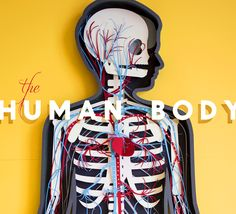 """The Human Body (Paper Stop-Motion) A handmade. - The Human Body (Paper Stop-Motion) A handmade """"demo video"""" for Tinybop's Human Body App, which teaches kids about how body systems function. All parts are made with paper—including the. The Human Body, Human Body Unit, Science Classroom, Teaching Science, Science Activities, Teaching Kids, Science Ideas, Science Fun, Science Projects"""