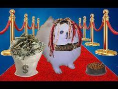 Gucci Dog - YouTube