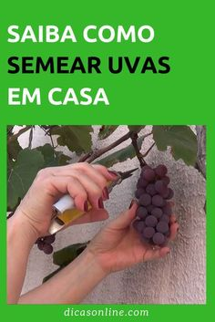 Grafting Fruit Trees, Plantas Bonsai, Tropical Garden, Permaculture, Agriculture, Vegetable Garden, Beautiful Gardens, Container Gardening, Flora