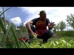 Cu tigaia-n spate - Ciorbă de salată şi raţă pe varză - YouTube Romanian Food, Food Videos, Youtube, Dan, Facebook, Google, Youtubers, Youtube Movies