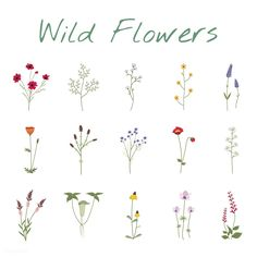 Set Collection of Wild Flowers Vector Illustration | Free Image by rawpixel.com