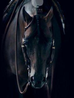 Beautiful!  Looks like a black western pleasure horse.
