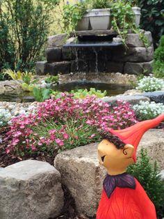 The garden pond Manoa