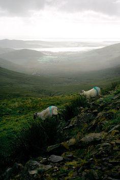 Dingle Peninsula, County Kerry. Ireland.