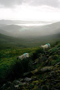 Dingle Peninsula, County Kerry. Ireland.