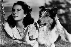 A very young Elizabeth Taylor with Lassie