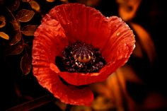 Remember them... beyond the tears by JoLoLog, via Flickr