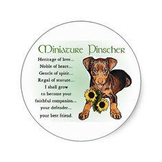 Love my Miniature Pinscher!!