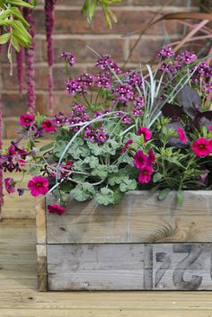 Pot for June colour: create this stylish display using a recycled wooden crate, cerise petunias, blue fescue grass, pink nemesia and pelargoniums. For more ideas on planting with petunias visit out website http://www.gardenersworld.com/plants/pots-containers/hanging-baskets/petunia-and-diascia-hanging-basket/5532.html Photo by Jason Ingram
