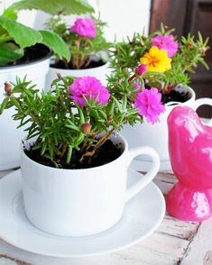Good Morning Nature! Cup that you use for your morning tea can be used for potting your favorite plants. Create an amazing masterpiece today!