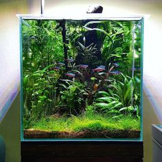 10 Tips on Designing a Freshwater Nature Aquarium Aquarium Design, Aquarium Setup, Aquascaping, Planted Aquarium, Vivarium, Paludarium, Aquarium Landscape, Nature Aquarium, Betta Fish Tank