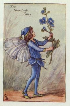 Speedwell Flower Fairy Print c.1927 Fairies by Cicely Mary Barker