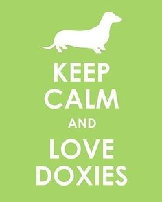 keep calm love doxies