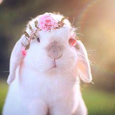 ❤️ Baby Bunny ❤️