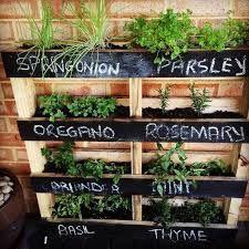 Výsledok vyhľadávania obrázkov pre dopyt pestovanie byliniek na balkóne