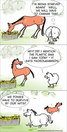Ponies are just soo clever! Especially when motivated by their stomachs. www.thewarmbloodhorse.com