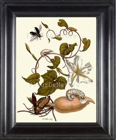 BOTANICAL PRINT Sibylla 8x10 Botanical Art Print by FleurDeNature, $10.00