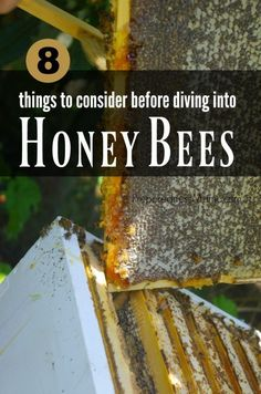 Things to Consider Before Diving Into Honey Bees Is beekeeping for you? 8 things to consider before diving into beekeeping Beekeeping For Beginners, Raising Bees, Backyard Beekeeping, Bee Friendly, Bee Happy, Save The Bees, Hobby Farms, Busy Bee, Bees Knees