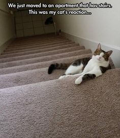 """* * """" Dis be de coolest 'ting. De possibilites be endless by wut lies atz de top of deez stairs!"""""""