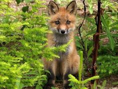 Animaux - FORETS                                                                                                                                                                                 Plus