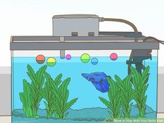 How to Play With Your Betta Fish: 7 Steps (with Pictures) Betta Fish Toys, Betta Fish Care, Freshwater Aquarium, Aquarium Fish, Fish Activities, Baby Friends, Beta Fish, Siamese Fighting Fish, African Cichlids