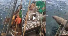 Leão-marinho é Pescado Por Acidente e Ele Nem Se Mostra Incomodado