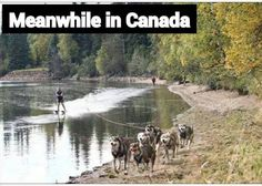 Meanwhile in Alaska. Funny pictures in Alaska. is hilarious! Canada Funny, Canada Eh, Canada Jokes, Visit Canada, Meanwhile In Canada, Canadian Things, Top Funny, T Rex, Summer Fun