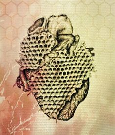 """""""My heart is a honey comb"""". Vintage inspired anatomical drawing with a twist by Andy van Dinh ༺(with some edits by heidi to make it stand out more) Bee Sting, Anatomical Heart, Heart Images, Bee Art, Human Heart, Heart Art, Bee Keeping, In A Heartbeat, Wood Burning"""