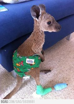 33 Cute Baby Animals Pictures With a Limb in Plaster Impressive Strang. - Magazine - 33 Cute Baby Animals Pictures With a Limb in Plaster Impressive Strang. 33 Cute Baby Animals Pictures With a Limb in Plaster Impressive Strange Funny - Baby Animals Pictures, Cute Baby Animals, Animals And Pets, Funny Animals, Wild Animals, Strange Animals, Save Animals, Animal Instinct, Cutest Thing Ever