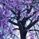 Árvore Brasileira: Ipê e Suas Diversidades