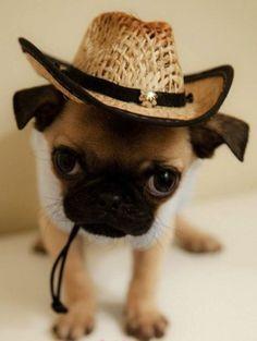 A tiny puppy wearing a cowboy hat. Enough said.