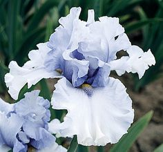 """Willamette Mist 