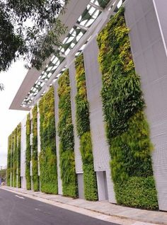The living wall at the Singapore Institute of Technology & Education - images courtesy of Victor Tan, Elmich