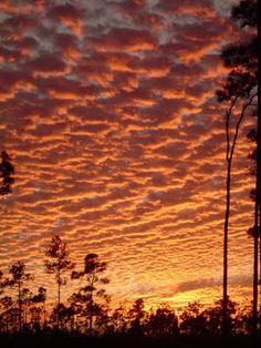 20308d51316 Winter Sky - Florida Everglades National Park