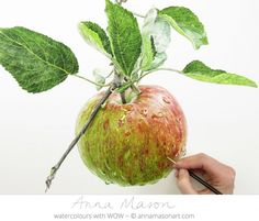 Apple by botanical artist Anna Mason - she also has a tutorial on her site annamasonart.com