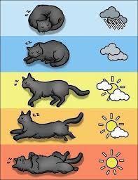 Картинки по запросу кот спит у батареи