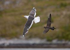Shorebirds, Sea Birds, Animals And Pets, Natural Beauty, Wildlife, Damon, Nature, Birds, Naturaleza